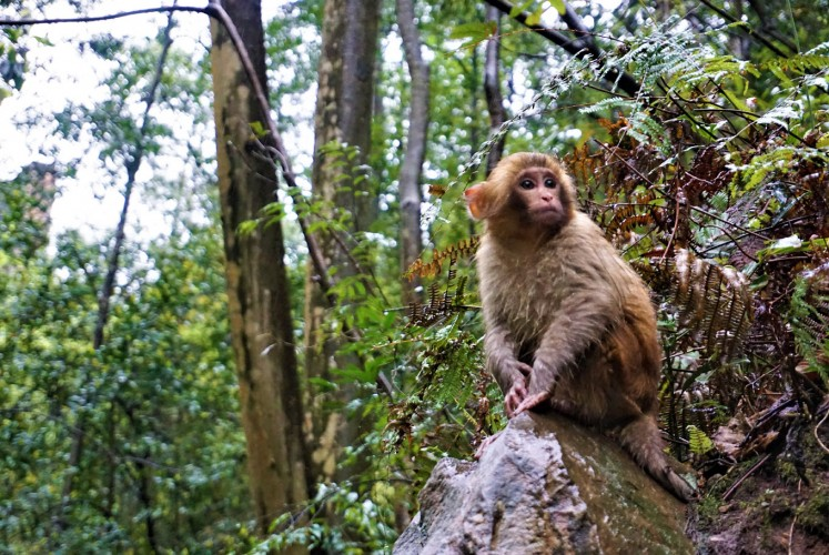 Monkeys and other animals make for interesting encounters in the Zhangjiajie National Forest Park.
