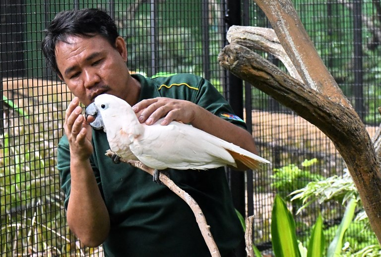 Deaf 'bird whisperer' forms rare bond with feathered friends