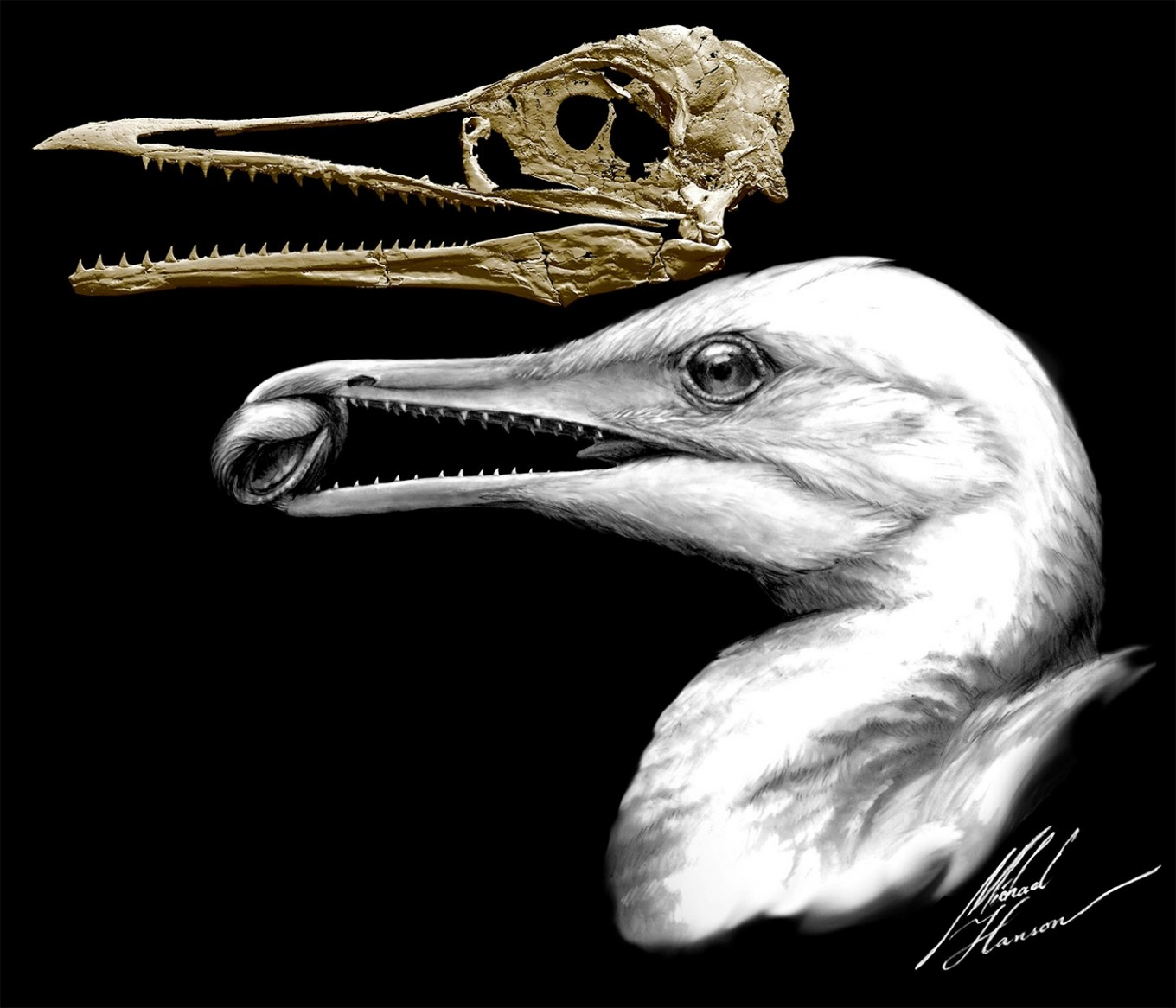 Ancient bird with beak and teeth blended dinosaur, avian traits
