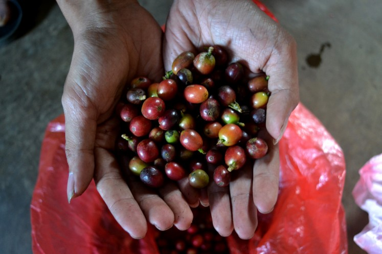 It is important to harvest the coffee cherries when they turn red, before carefully sorting them and handling them with the best full-washed or natural treatment processes afterward.