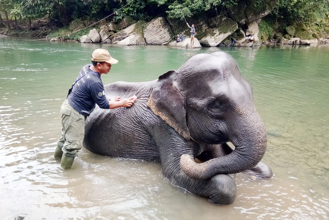 Patience pays off for elephants' keepers in North Sumatra