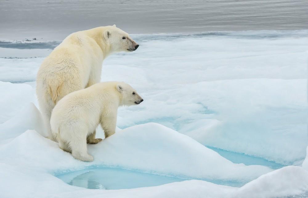 Hotter seas threaten marine wildlife with extinction: Researchers