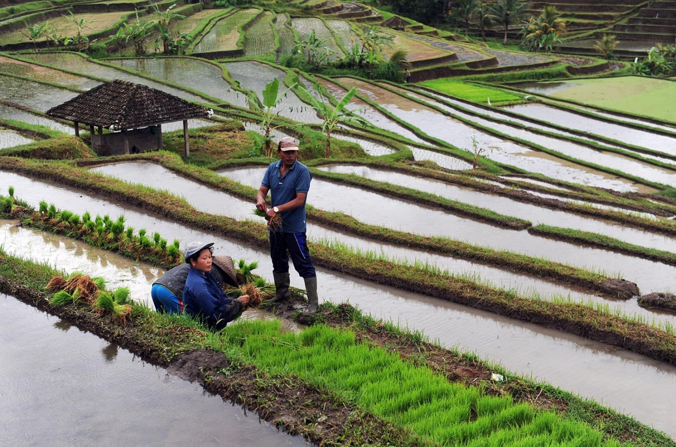 Addressing accuracy in chronic rice data problem