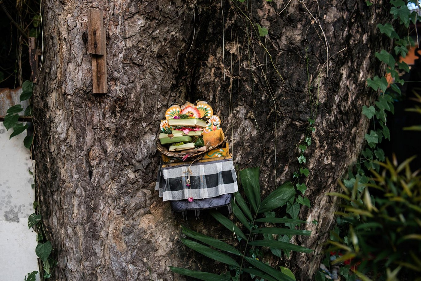 A wooden plate of offerings is placed in a tree on Jl. Hayam Wuruk in Denpasar, Bali. JP/Anggara Mahendra