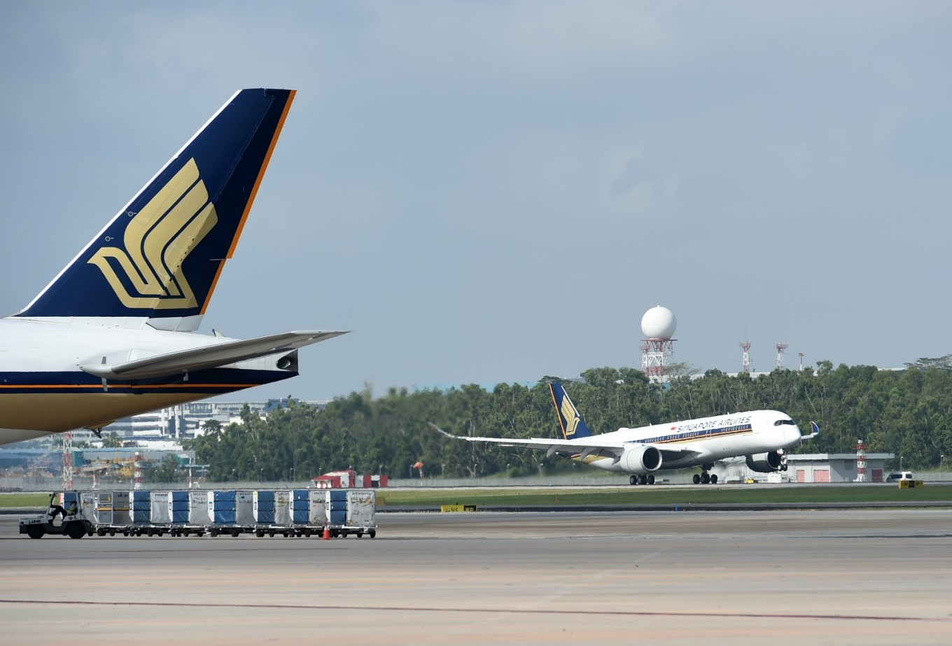 Shark fins found in Singapore Airlines shipment to Hong Kong