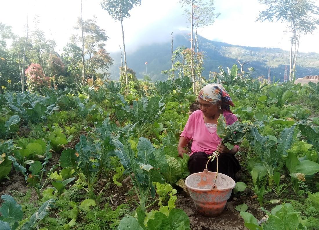 'Sister Village' prepared for Merapi eruption