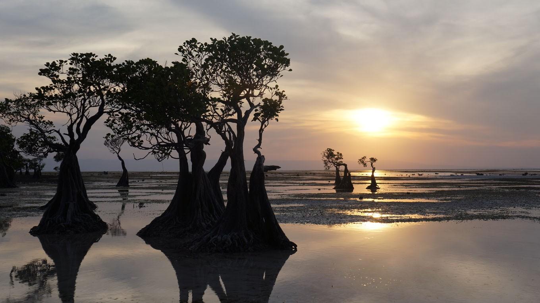Jakpost explores Sumba