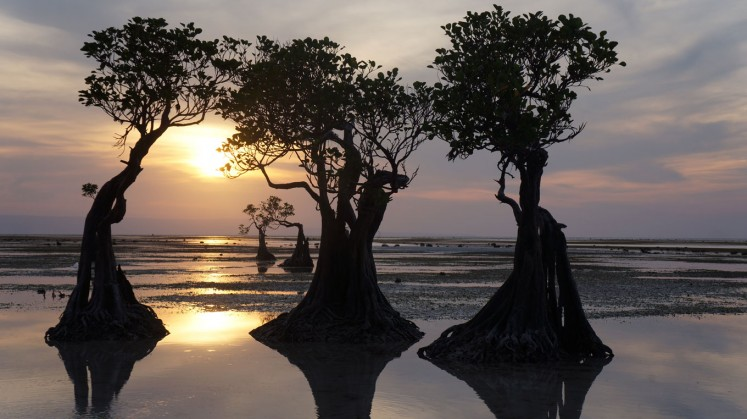 The 'dancing trees' in Walakiri Beach, Waingapu, East Sumba