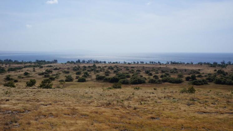 Puru Kambera savannah in East Sumba.