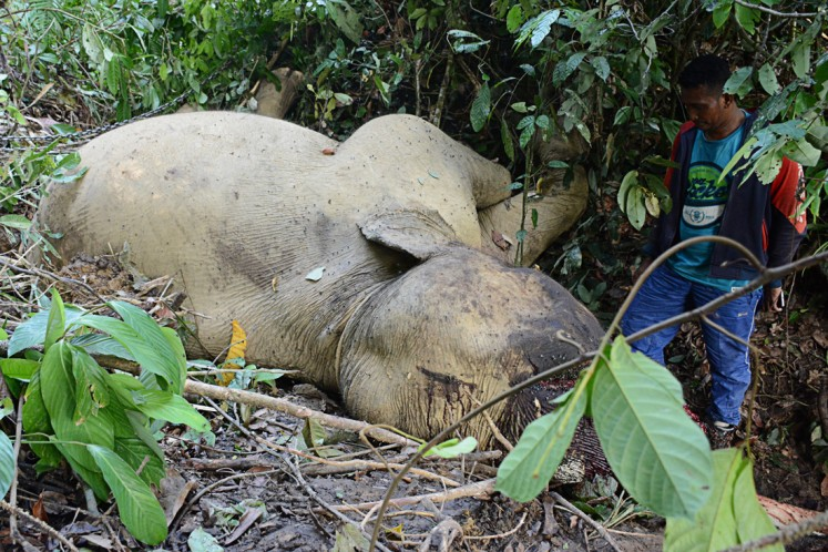 A villager looks at the body of Bunta, a tame male elephant of the Serbajadi Conservation Response Unit (CRU) that was killed on June 10 in Bunin village, Serbajadi district, East Aceh. Bunta was the lead