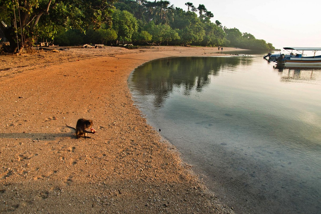 A macaque sits on Bama Beach, in the easternmost part of Java Island. JP/Tarko Sudiarno