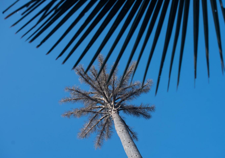 The clean blue sky of Baluran National Park. JP/Tarko Sudiarno
