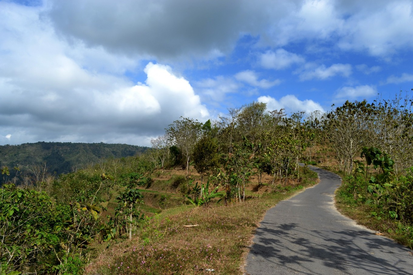 A curvy road near Mount Sewu, lined with teak forest and karst.