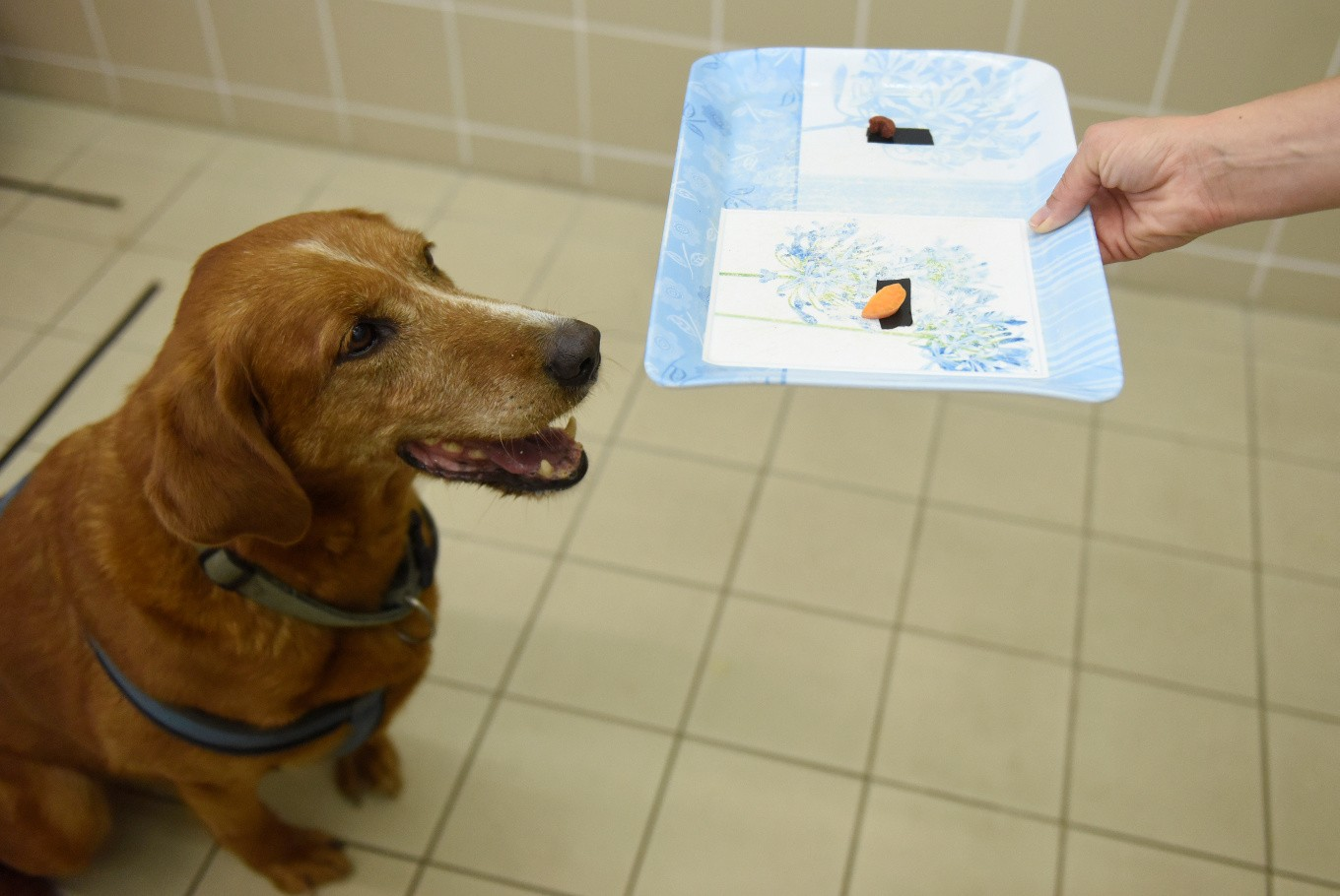 Research on dogs might shed light on human responses to food: Study