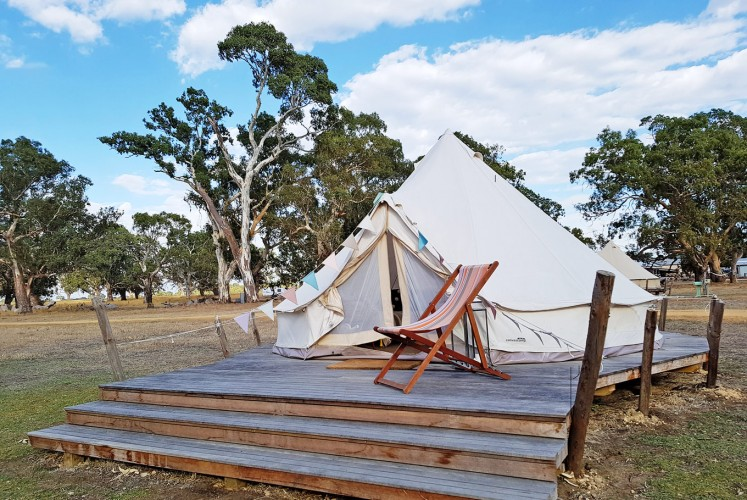 Laidback scene: A tent on Bellwether campground surrounded by red gums.