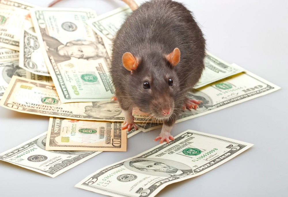 Rats break into ATM, munch through $18,000 in cash