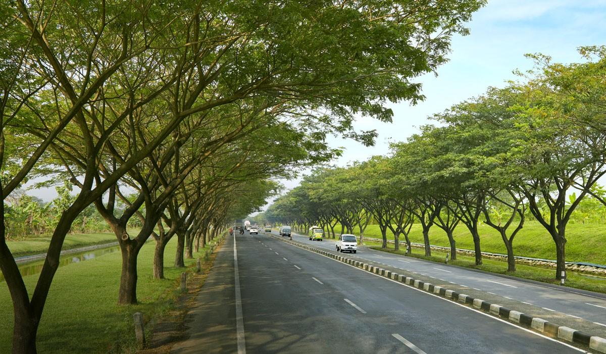 'Trembesi' trees to provide shade along Gempol-Pasuruan toll road