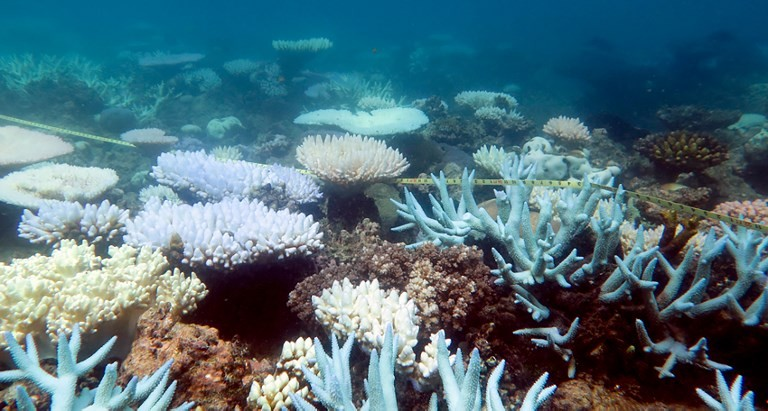 Great Barrier Reef suffers mass coral bleaching event