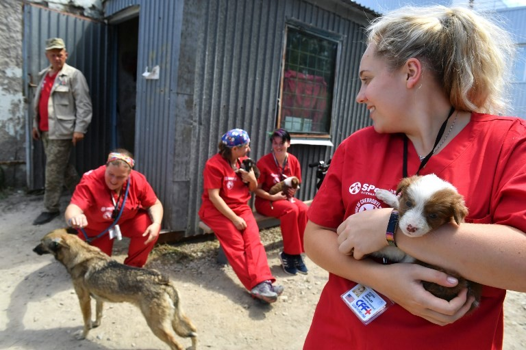 Chernobyl's stray dogs offered new life in US