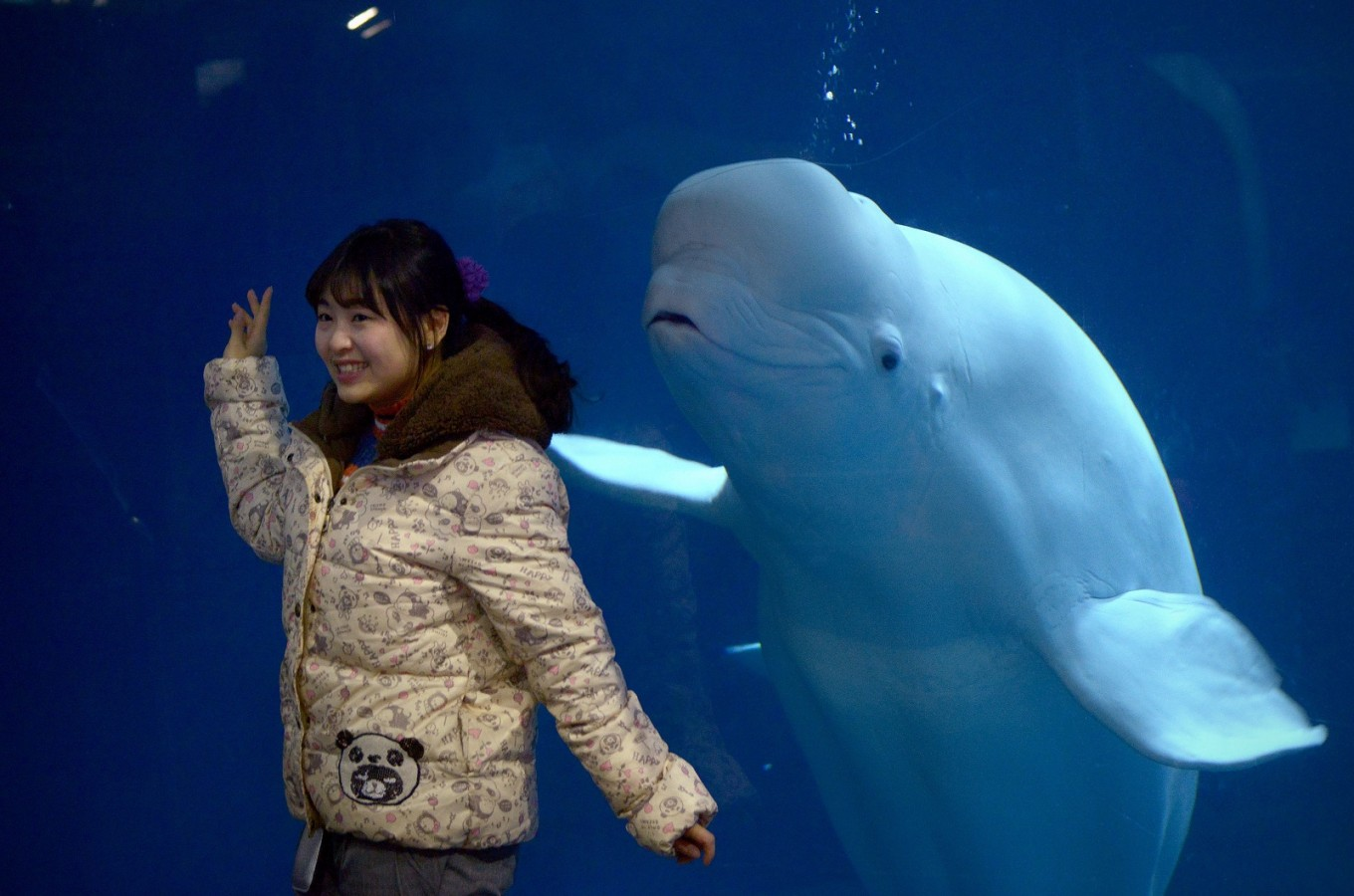 Captive whales find new home as aquarium shows decline