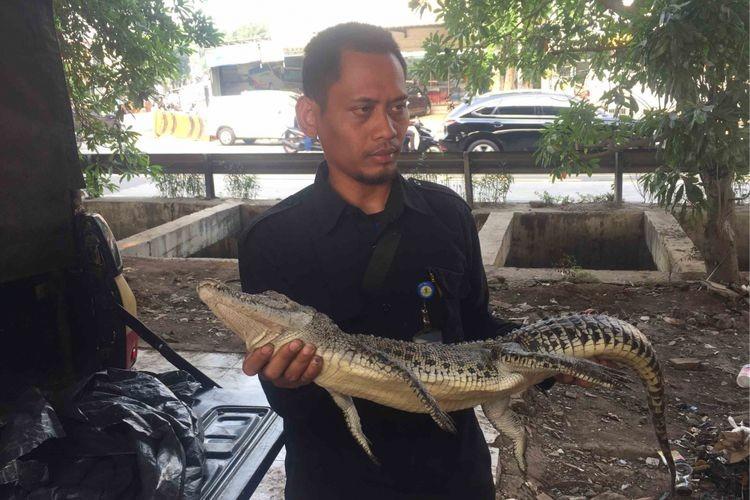 W. Jakarta residents claim to have found Grogol River crocodile