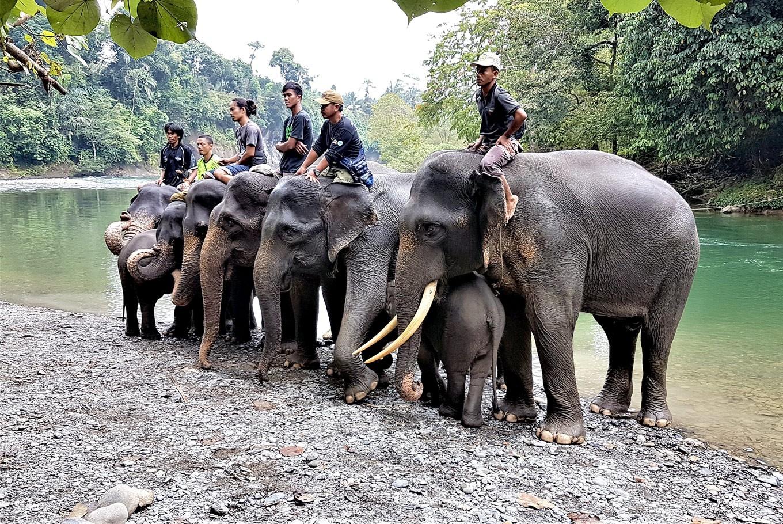 Elephant ecotourism stomps illegal logging