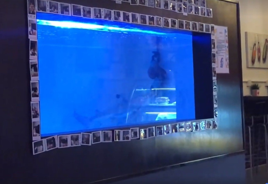 Video of shark in Malaysia restaurant aquarium sparks outrage