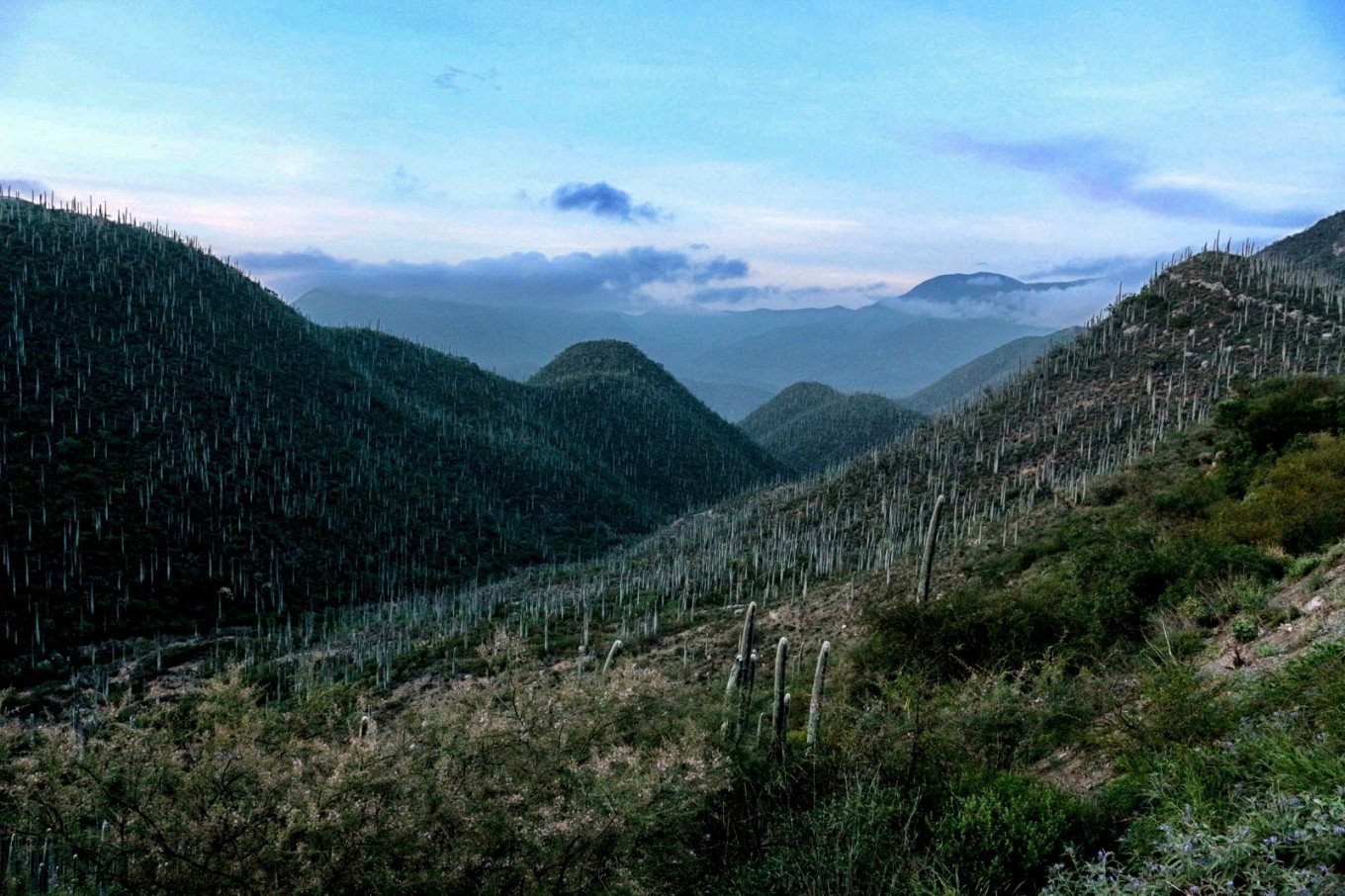 Valley of Tehuacan-Cuicatlan listed as UNESCO heritage site
