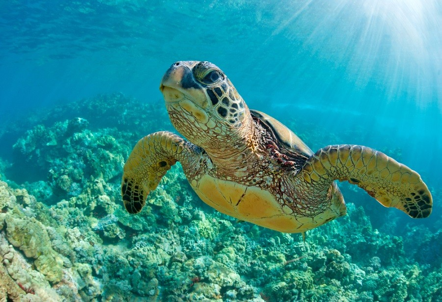 Attempting to protect sea life, Hawaii bans popular sunscreen brands