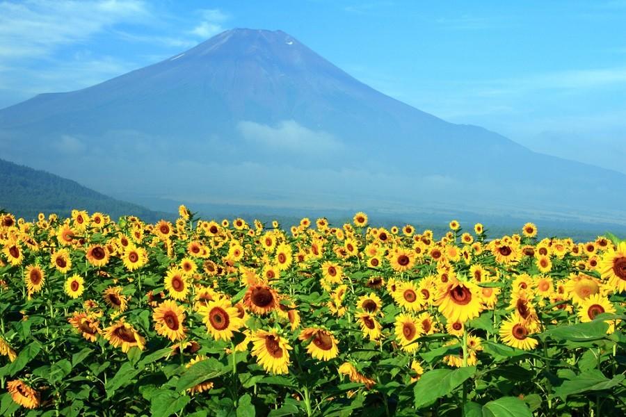 Mt. Fuji trails in Shizuoka open for this year's climbing season