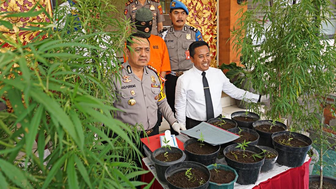 Police find 1.5 hectare marijuana field in Purwakarta