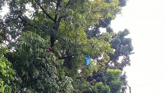 South Tangerang man sues neighbor for cutting down trees