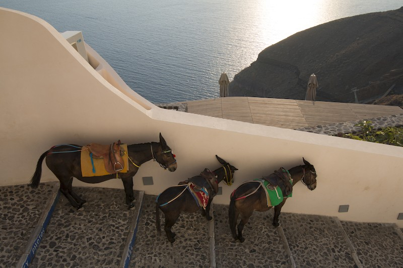 Greek holiday hotspot to protect over-worked donkeys