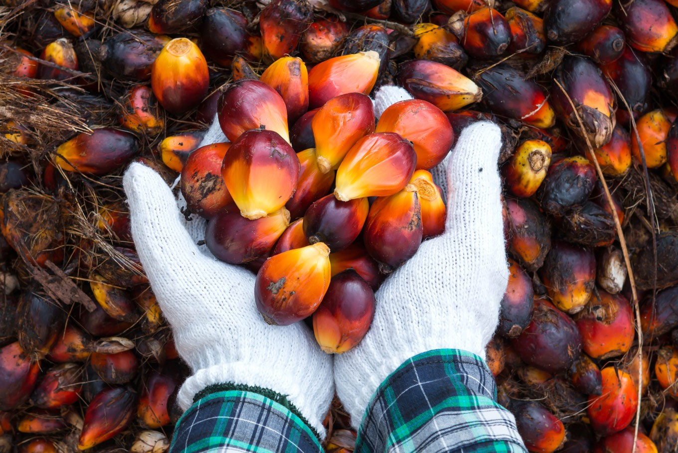Farmers dispute palm oil prosperity claims