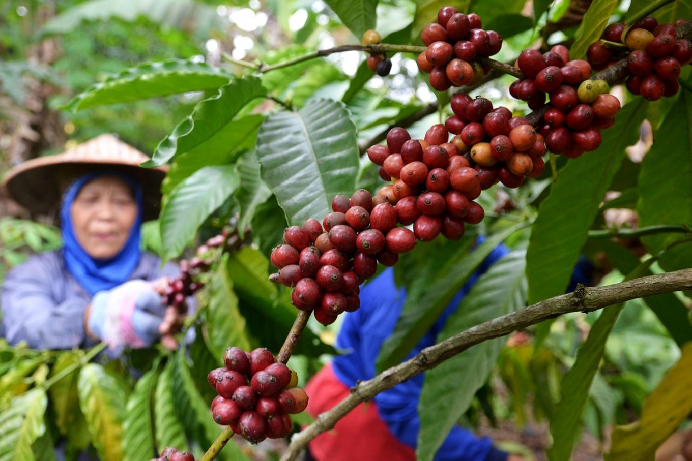 North Sumatra becomes major exporter of agricultural commodities