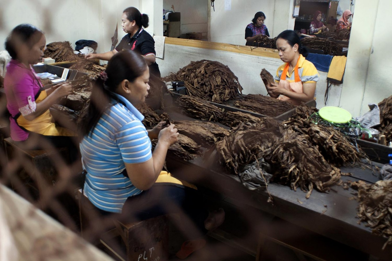 Female workers sort dried Vorstenlanden tobacco leaves before going to the cutting machine. JP/Magnus Hendratmo