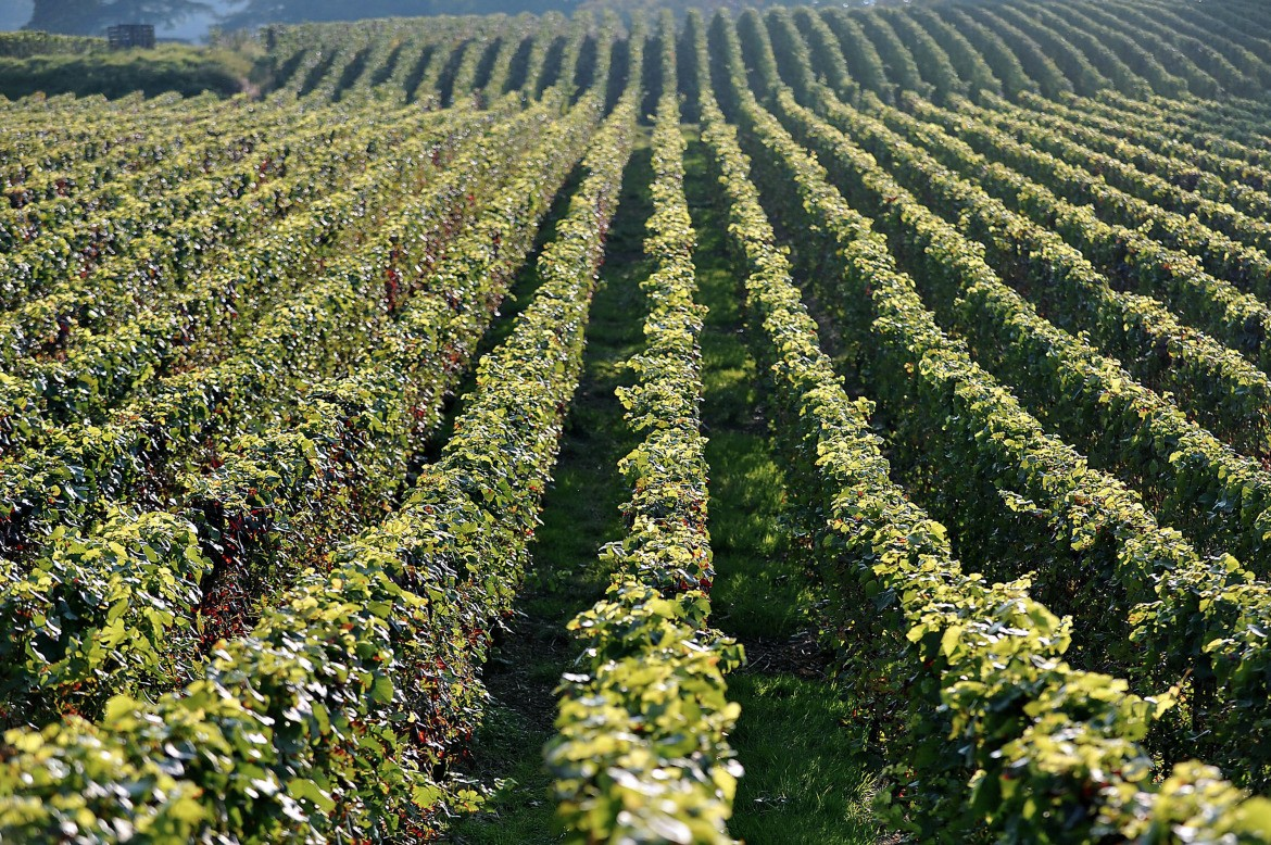 Climate change in Champagne has winemakers prepping for future