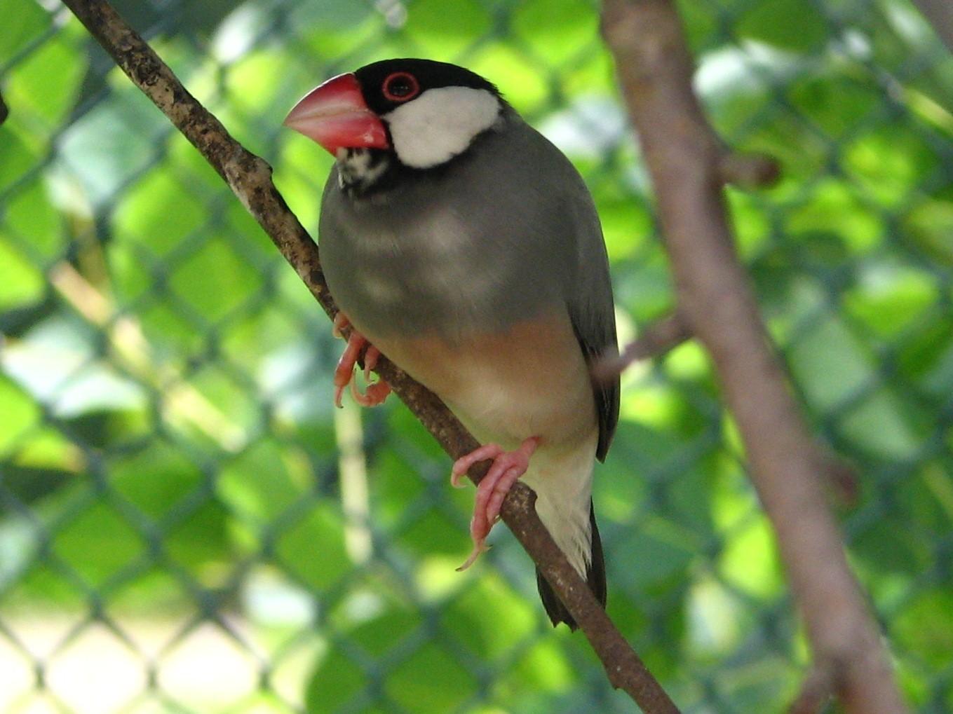 New species list not retroactive: Ministry