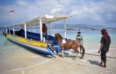 Villagers attempt to transport their horse from Gili Trawangan islet following the aftermath. Horses are usually used to draw carriages. Antara/Ahmad Subaidi