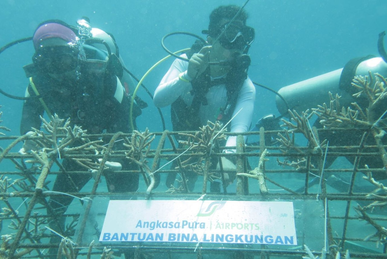 Over one third of Indonesia's coral reefs in bad state: Study