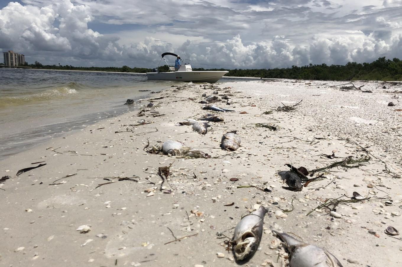 'Devastating' dolphin loss in Florida red tide disaster