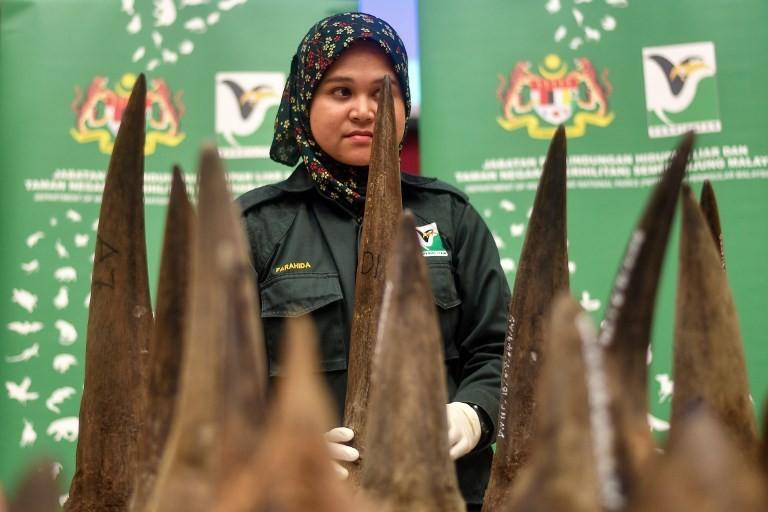 Malaysia makes record $12M rhino horn seizure