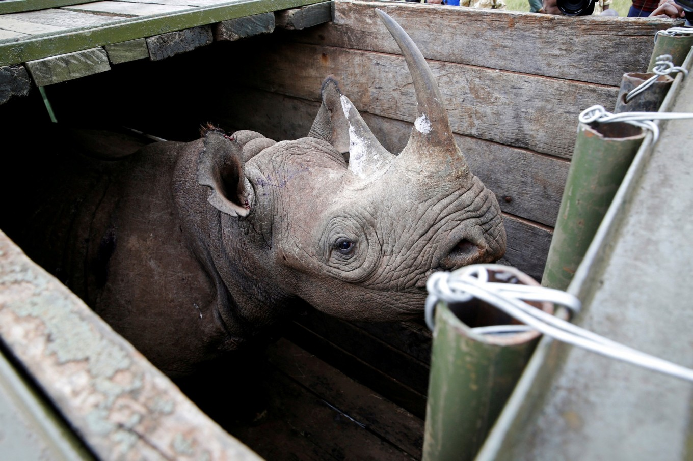'Saving species with feces': Rhino poo aids conservation study