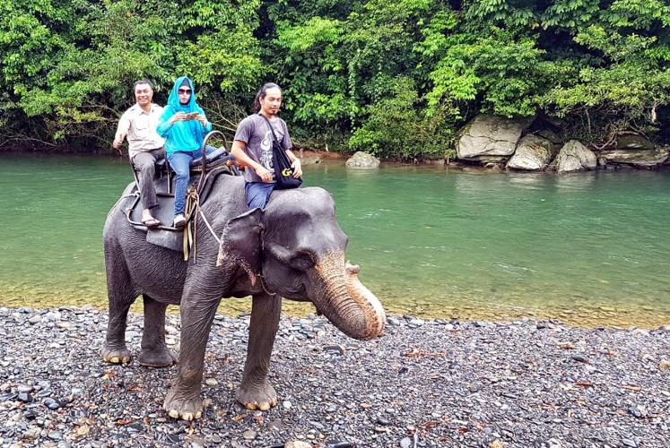 Into the jungle: Tourists ride an elephant.