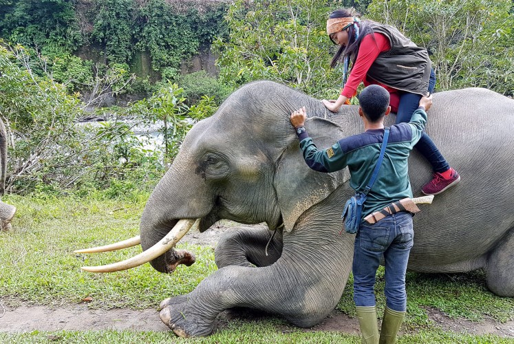 Hop on: A tourist is assisted by a mahout to climb atop an elephant.