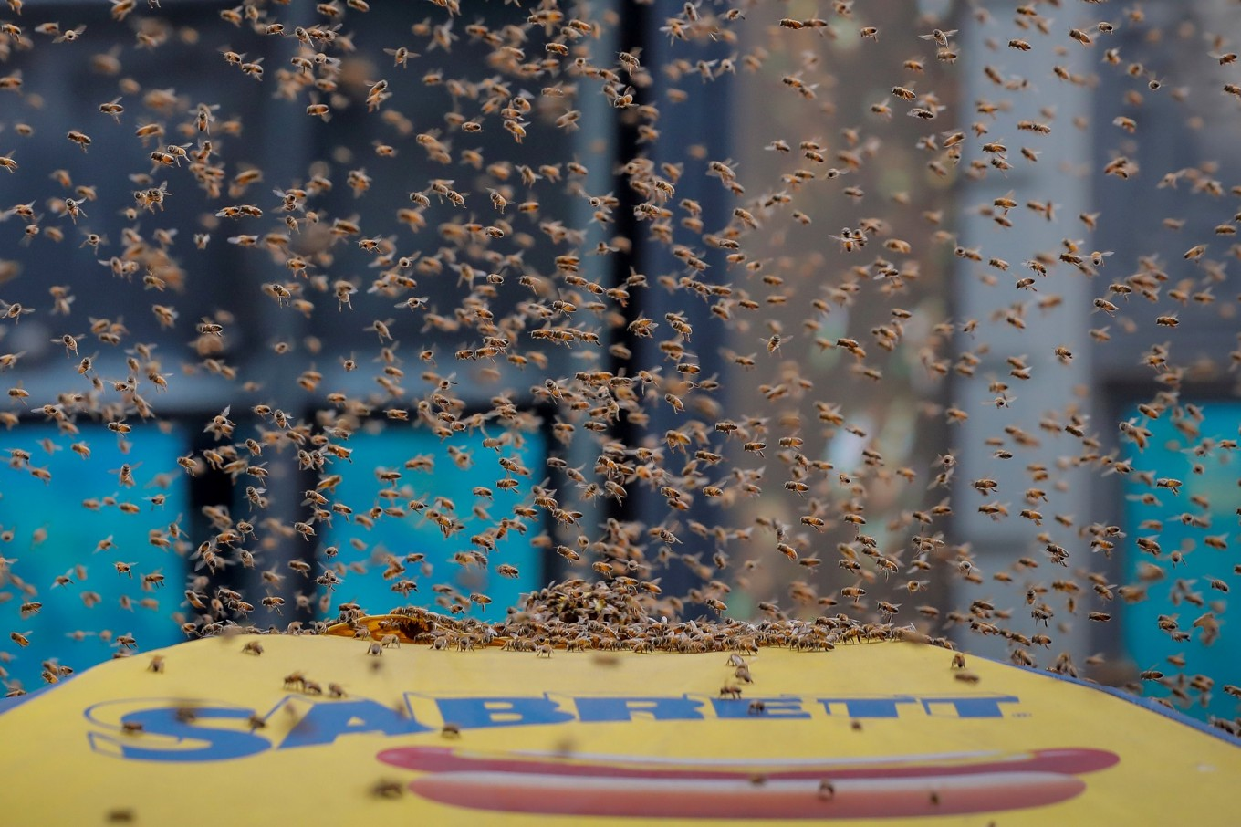 Bees besiege Times Square street, drawing swarm of tourists