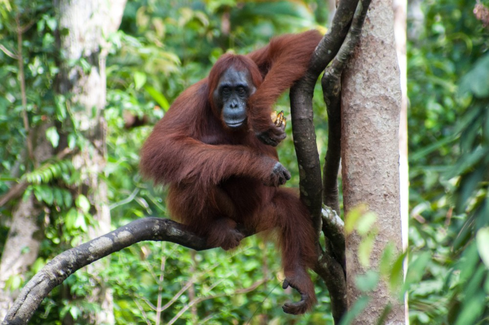 Indonesia tackles clean-up in palm oil head on