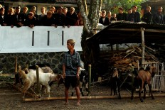 Final minutes: A man watches over goats that will be sacrified for Idul Adha by the Bonokeling tribal community. JP/Kukuh Sukmana Hasan Surya