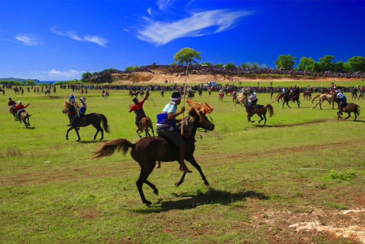 Skillful riders: Locals take part in a buffalo and horse race, a very common activity in  Sumbawa, West Nusa Tenggara.