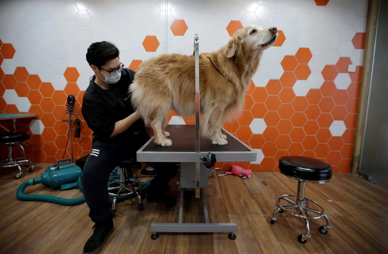 China's expected surge in pet spending draws disbelief, criticism